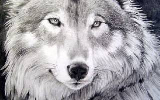 Пословицы про волка