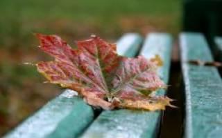 Пословицы про осень
