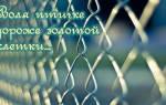 Пословицы про свободу