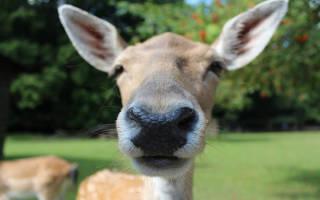 Поговорки про нос