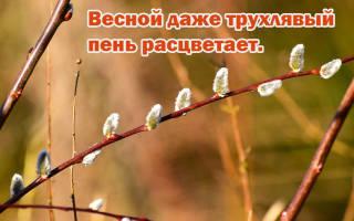 Пословицы о весне