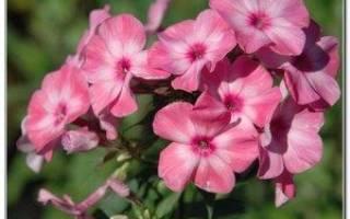 Поговорки про цветы
