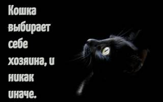 Статусы про кошек