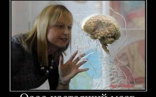 Смешные статусы про мозги