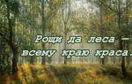 Поговорки о лесе