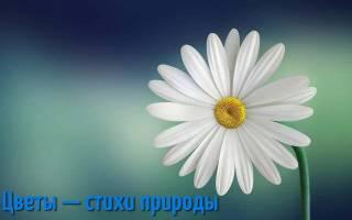 Про цветы афоризм