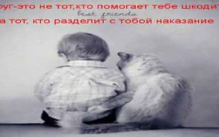 Статусы про друзей хороших